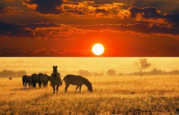 интересные факты про Африку